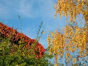Casa-aiva-autunno