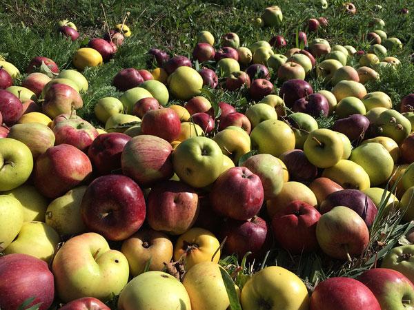 La-frutta-di-Casa-Aiva
