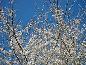 Casa Aiva primavera