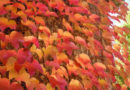 casa-aiva_colori-autunno2