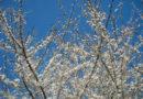casa-aiva_primavera_primi-fiori