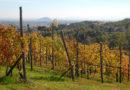 casa-aiva_vigna-in-autunno