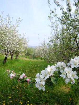 Casa-Aiva-meleto-in-primavera